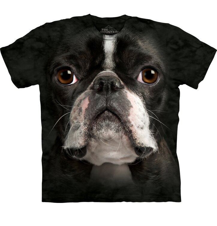 Boston Terrier Adult